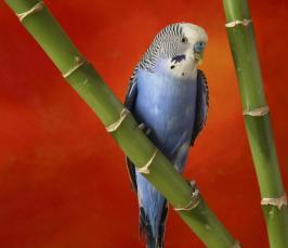 26 май 2012 .  Посмотреть видео Умный маленький попугай онлайн и совершенно бесплатно.